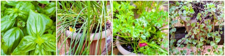 Learn more about using fresh herbs in cooking @ www.slowcookerkitchen.com